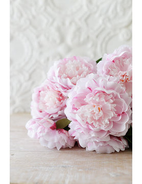 French Peony