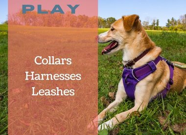 Collar/Leash/Harness