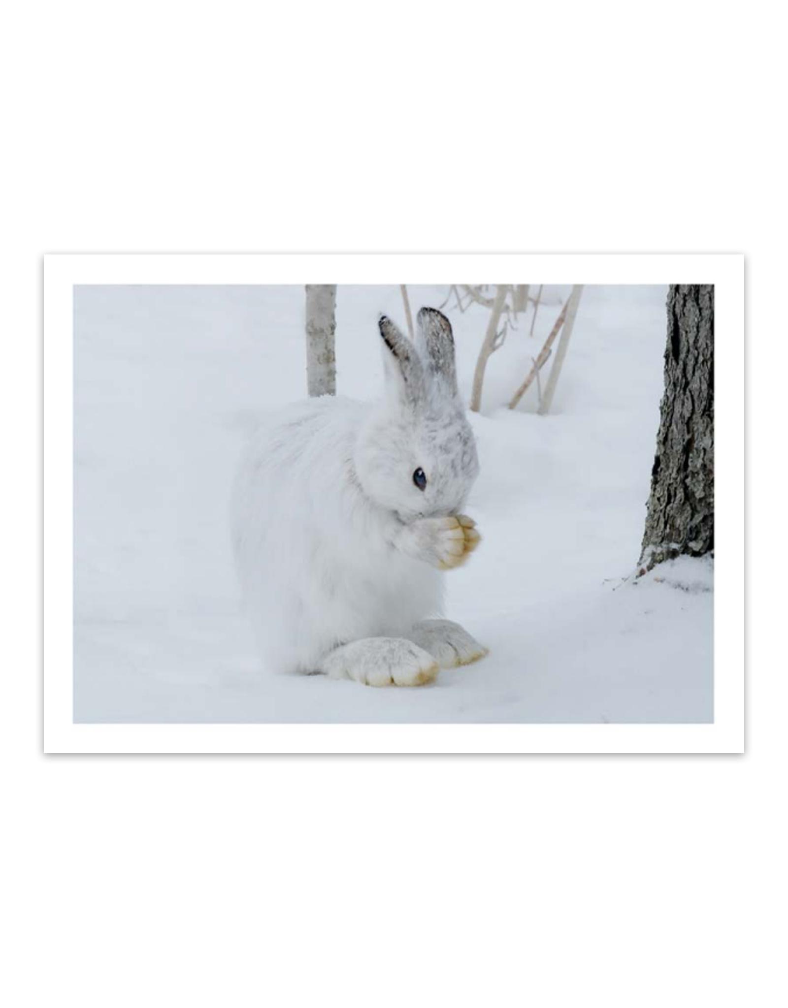 Cards Praying Hare