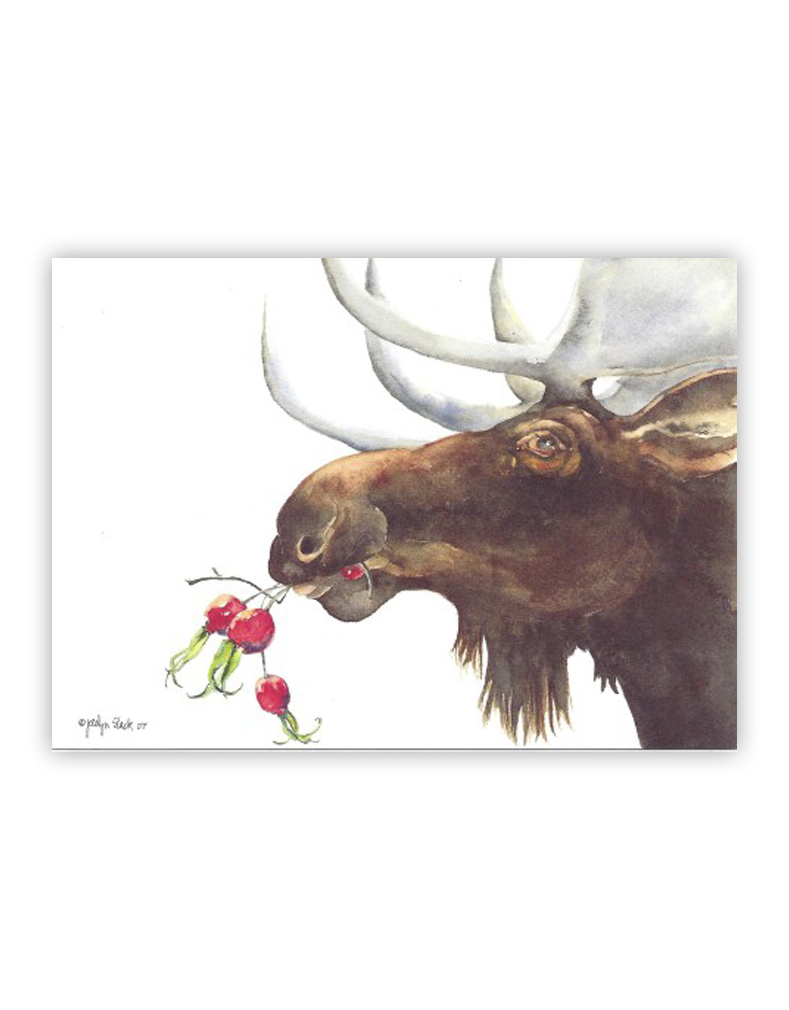 Moose Rosehips Boxed Cards
