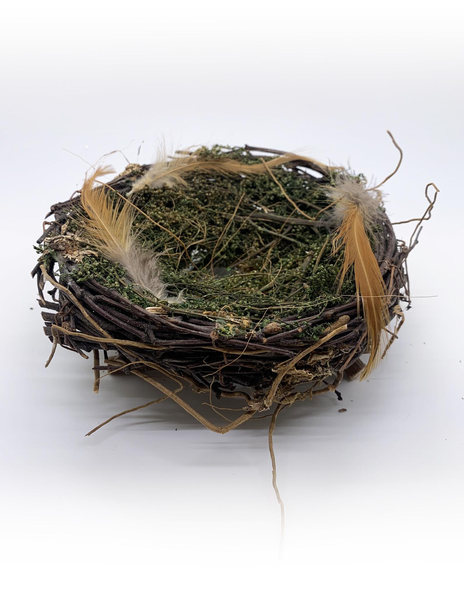 Large Wrens Nest