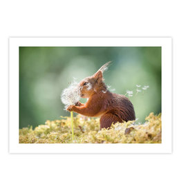 Squirrel Wishes Card