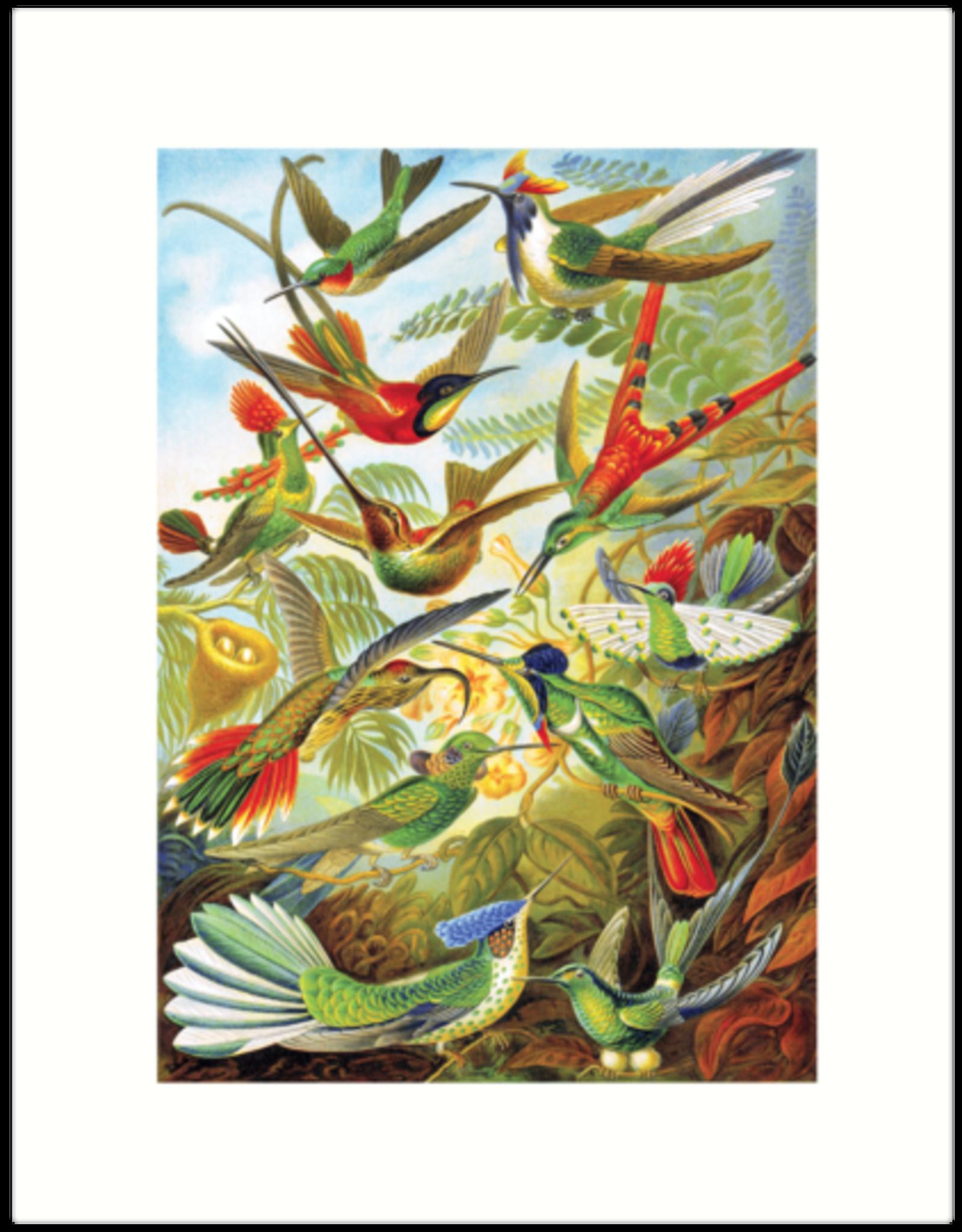 Haeckel 99 Card