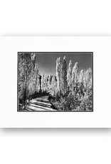 Ansel Adams Poplar Trees