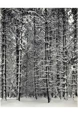 Ansel Adams Pine Forest