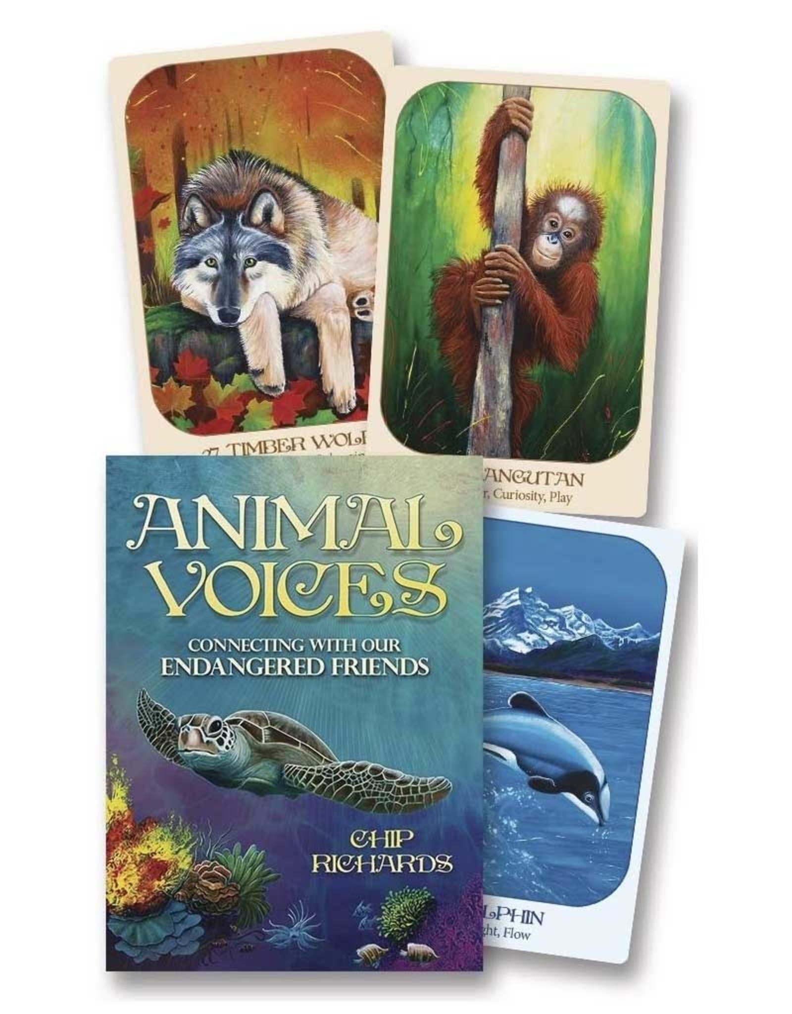 Chip Richards Animal Voices Kids Cards by Chip Richards