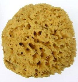 Body Sea Sponge