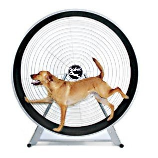 GoPet GoPet TreadWheel For Large Dogs