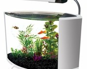 Aquariums and kits