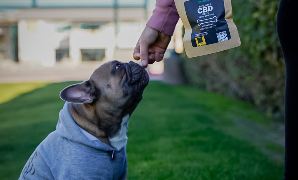 4th of July and How it Affects Pets: CBD Products for Dogs