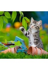 "Ravensburger ""Tiger Kittens"" 3X 49 Piece Puzzles"
