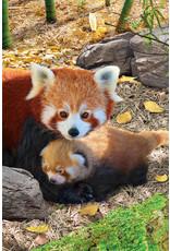 "Eurographics ""Red Pandas"" 250 Piece Puzzle"