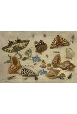 """Artifact Puzzles """"Kessel Shells"""" Wooden Jigsaw Puzzle"""