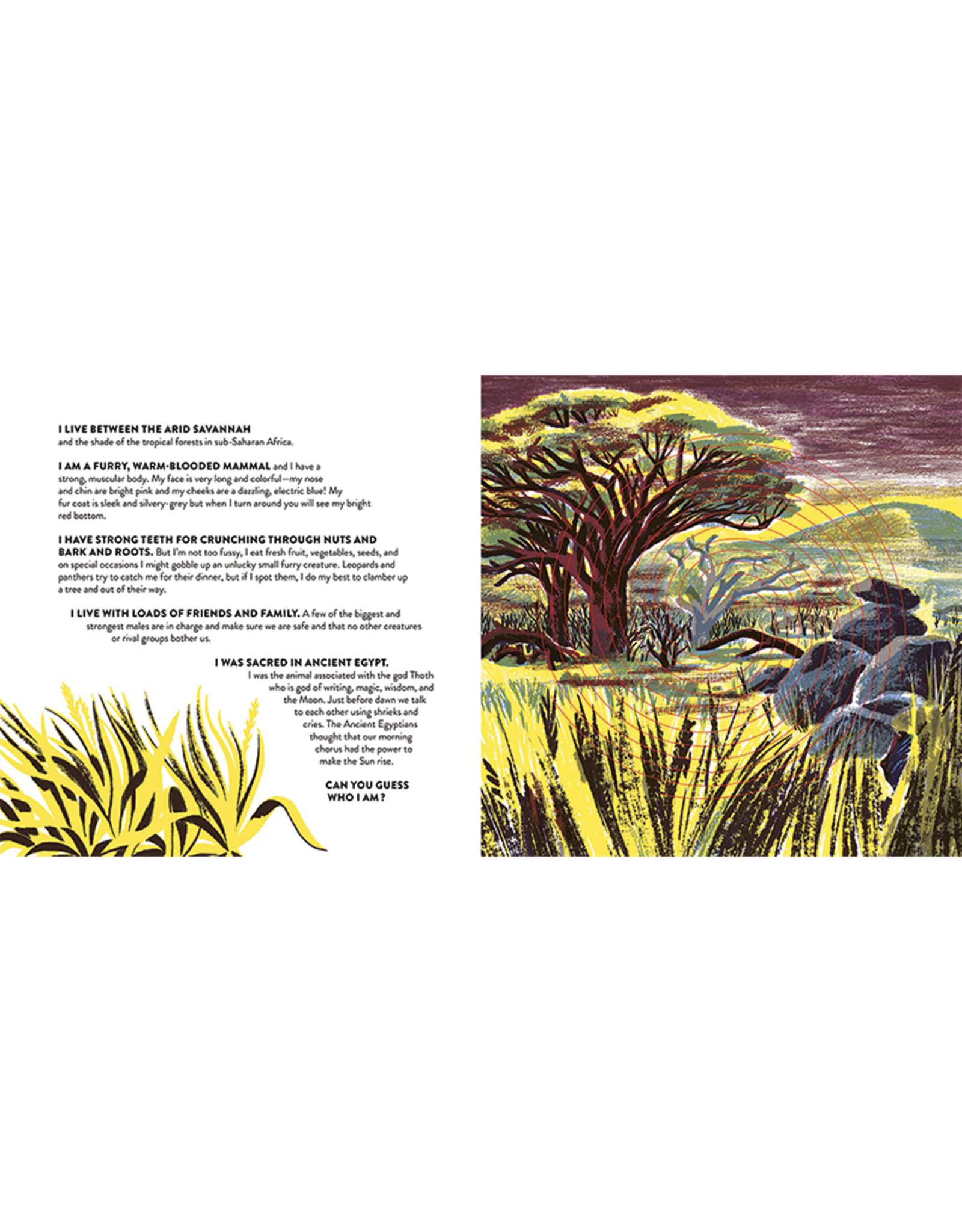 Wide Eyed Editions Whose Habitat Is That?  Pop-Up Book