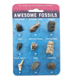 Copernicus Toys Awesome Fossils Card