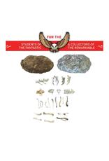 Copernicus Toys Compact Curiosity: Owl Pellet