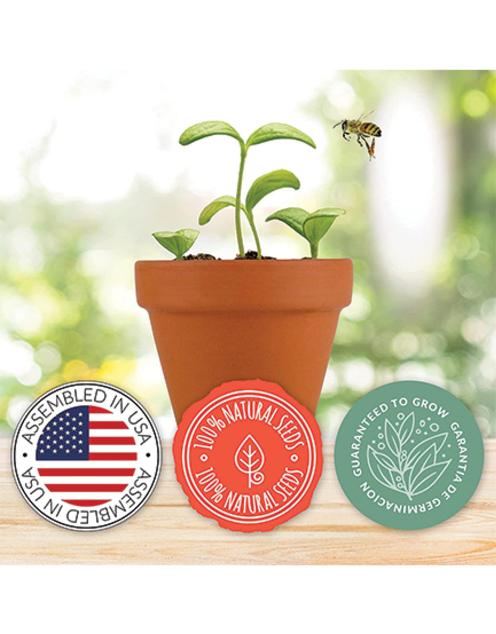 Save The Bees Daisy Grow Kit