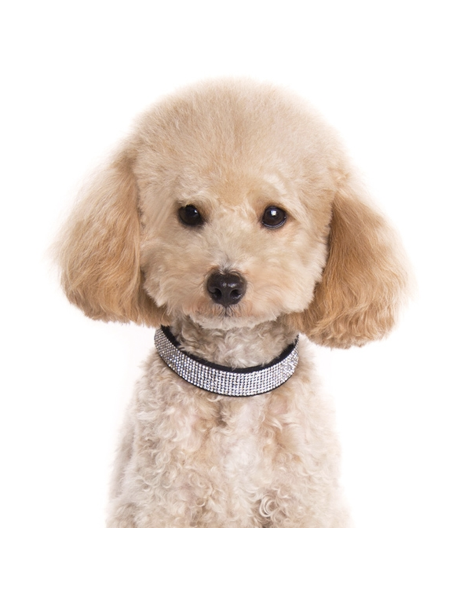 Dogo VIP Bling Collar - Black