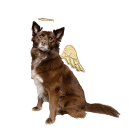 Pet Krewe Angel Costumer