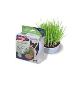 Van Ness Van Ness - Oat Garden Grass Kit