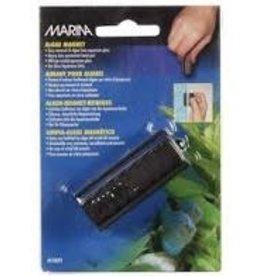 Marina Marina - Algae Magnet