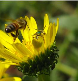 Xerxes Pollinator Mix