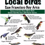 Local Birds of the SF Bay Area Folding Card