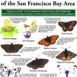 Local Butterflies of the SF Bay Area Folding Card