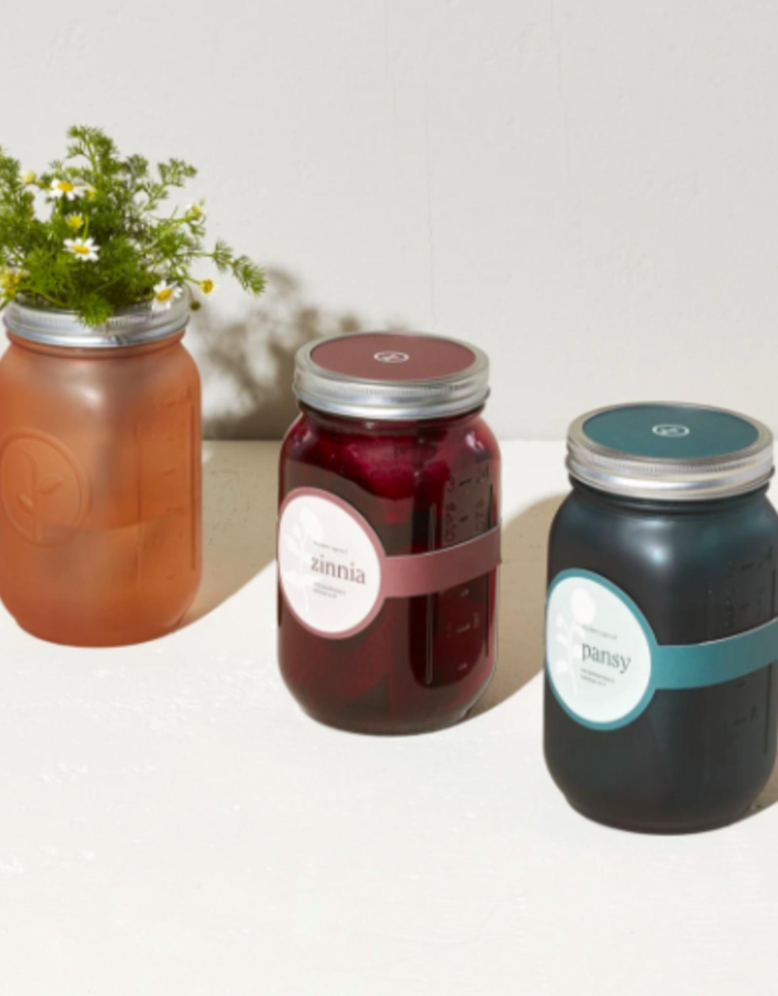 Modern Sprout Herb Jars