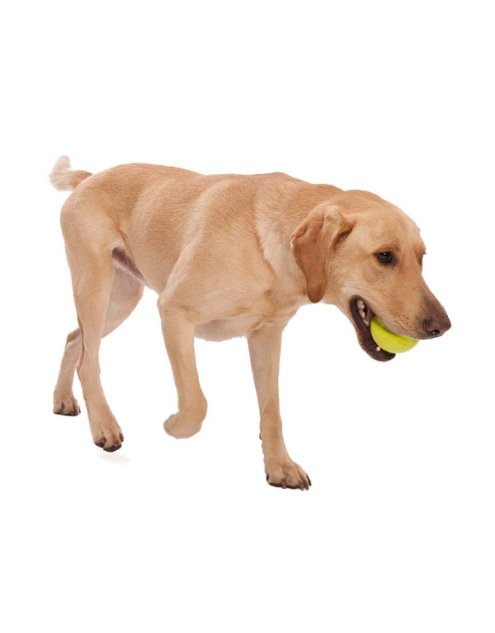 West Paw Zogoflex Jive Dog Ball
