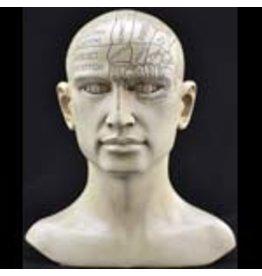 Phrenology Head 8 inches