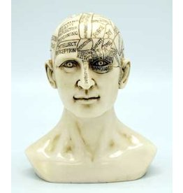 Phrenology Head 6 inches