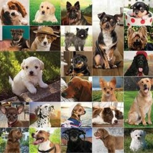 Dogs Dogs Dogs Jigsaw Puzzle 1000pc