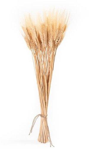 RNR Wheat Small Bunch