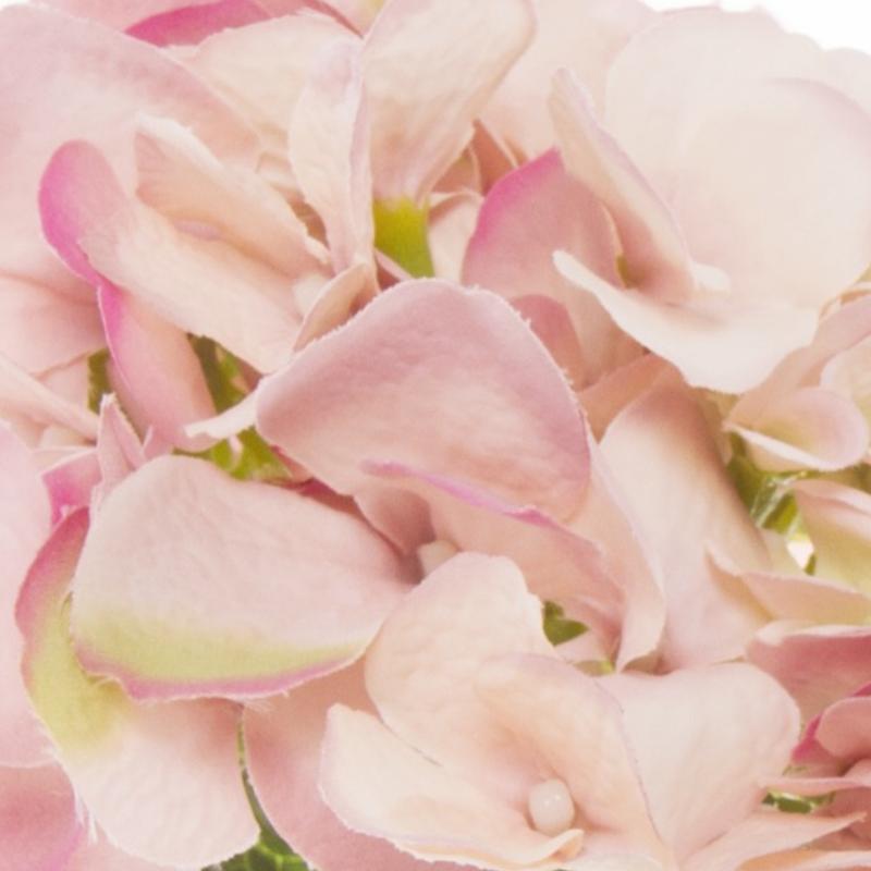 KOCH Hydrangea Victoria Green/pink (small)