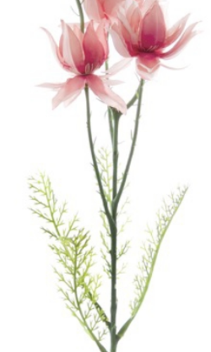 KOCH Blushing Bride Pink 60cm