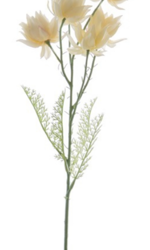 KOCH Blushing Bride White 60cm