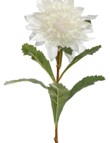 KOCH Waratah White Aust Native