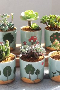 Ceramic House Pot W/saucer