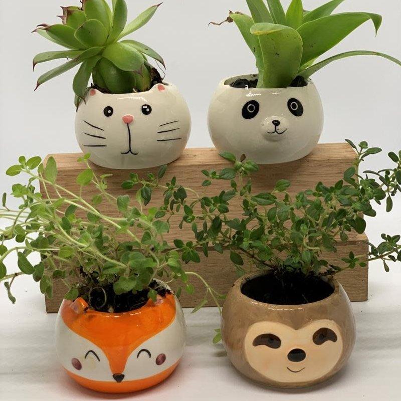 Cute Animal Face Pot (random selection)