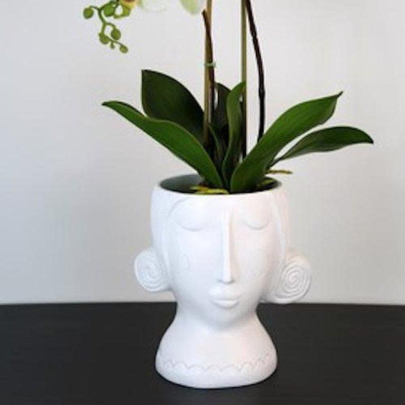 White Rose Madame Planter
