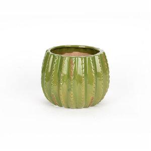 Cactus Pot Large