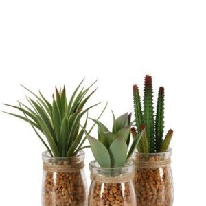Succulent  Artificial in Jar 9cm (colour may Vary)