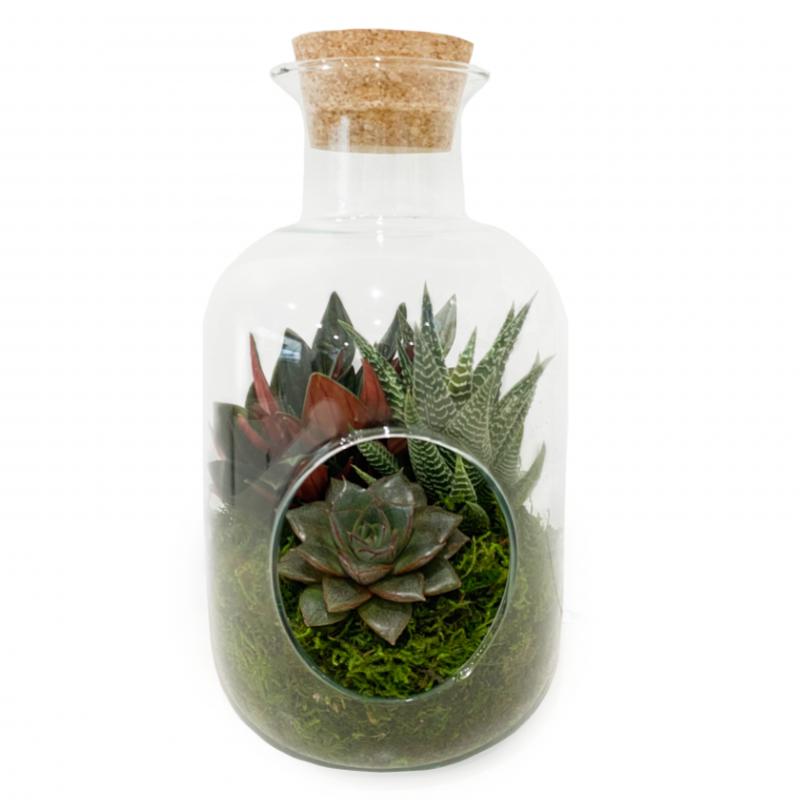 RNR Terrarium Glass Bottle Cork lid 265/140mm (B)
