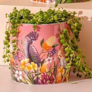 Pot Planter Exotic Paradiso Small