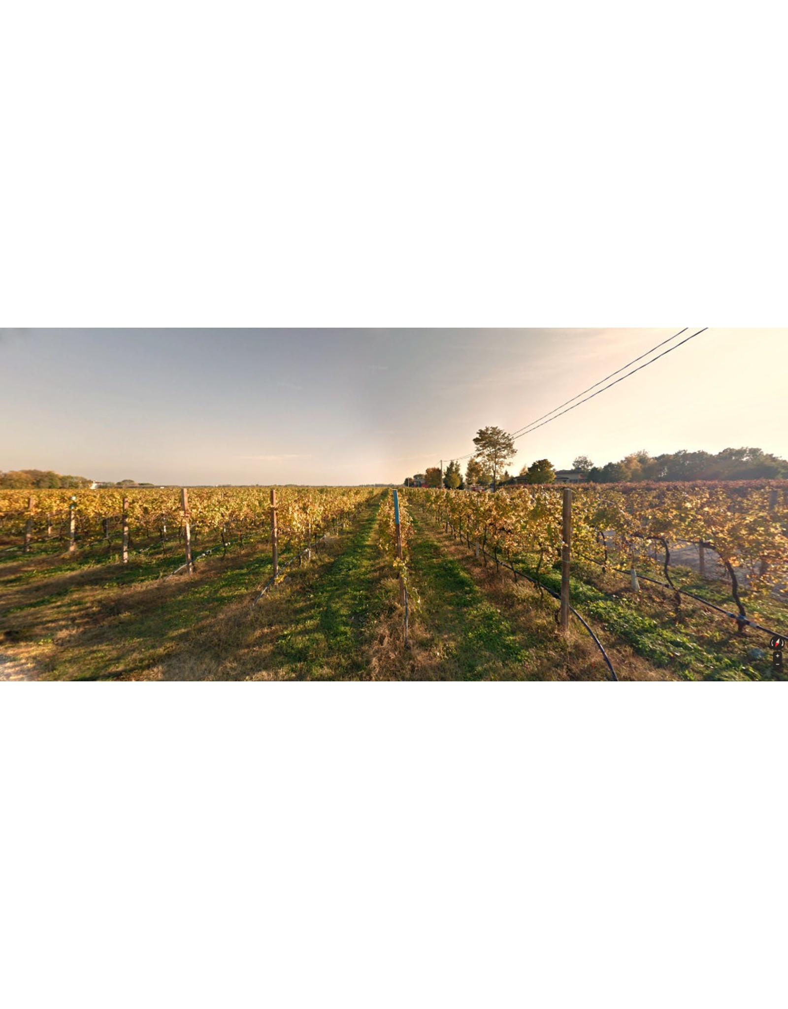 Pinot Grigio Borgo Magredo Pinot Grigio 19