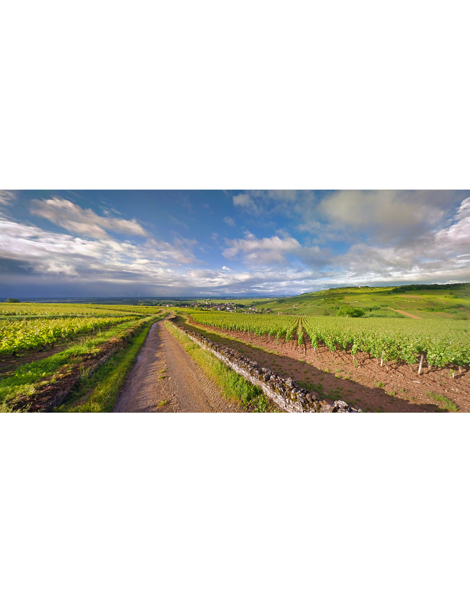 Chardonnay Aubert Lefas Bourgogne Les Grandes Carelles WHITE 19