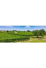 Bordeaux Blend Ch Haut Canteloup Blaye Cotes de Bordeaux 16