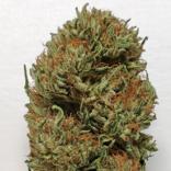 CBG Flower: Dutch Treat