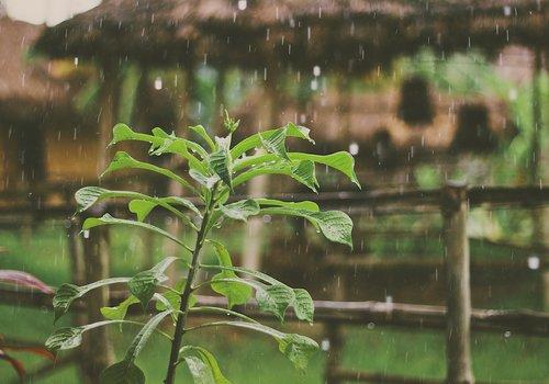 Precipitacion Pluvial